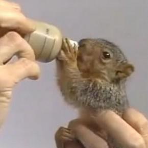 O esquilo mais fofo da cidade!