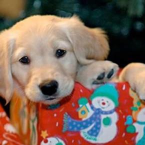 Quer abrir presentes? Os filhotes ajudam!