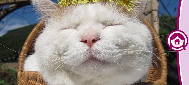 Os gatos mais famosos de 2014