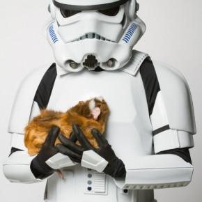 Personagens de Star Wars em campanha para adoção de animais