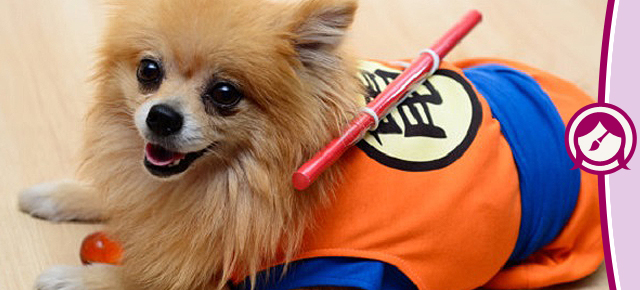Cosplays fofos transformam seu cachorro em Link, Naruto ou Goku