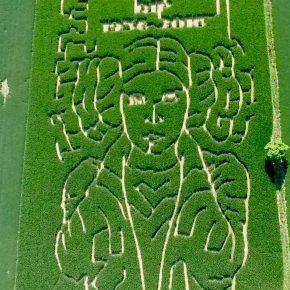 Fazendeiro cria labirinto de milho em homenagem a Carrie Fisher