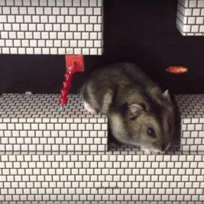 Super Mario Bros.: Hamster 1Up!
